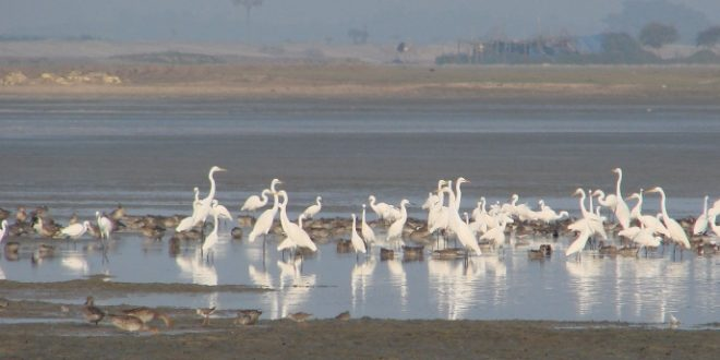 Bird poachers turn protectors in Mangalajodi, Chilika