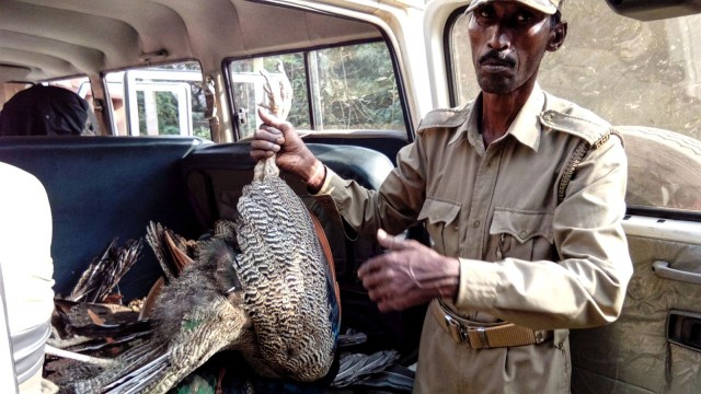 Peacock death in Odisha - not due to bird flu