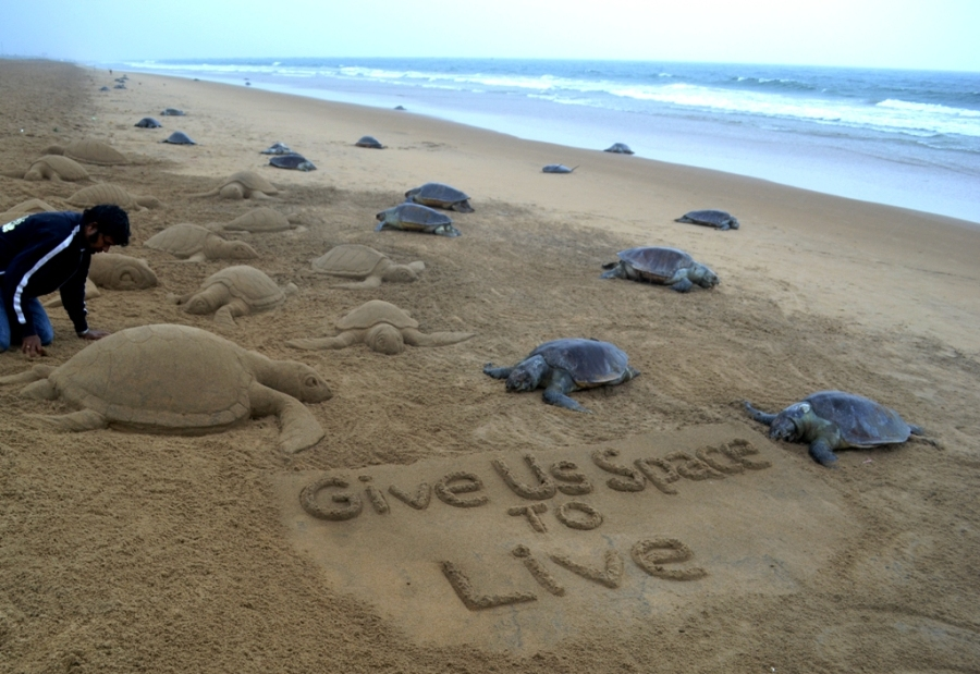 Hundreds of dead turtles found at Puri beach; Sudarsan appeals for conservation