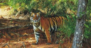 Odisha to rationalize Satkosia tiger reserve boundary