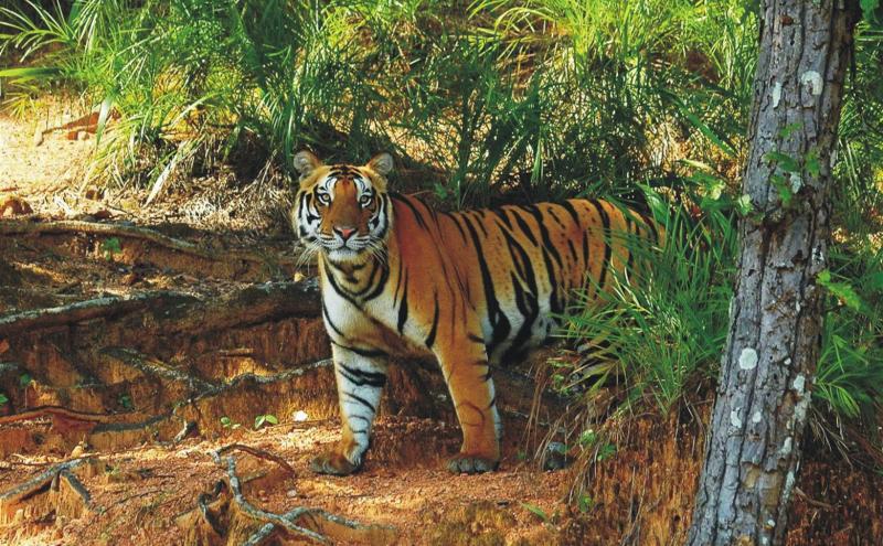 Odisha to rationalize Satkosia tiger reserve boundary