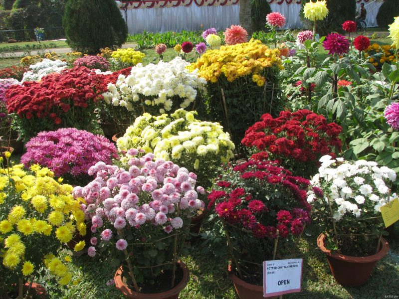 Thousands throng to witness Flower Show- 2016