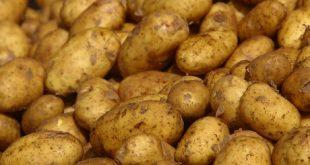 Potato Crisis In Odisha Ministers At Loggerheads; Opp Mocks