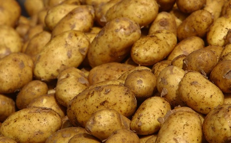 Potato Crisis In Odisha Ministers At Loggerheads; Opp Mocks
