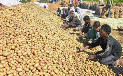 Potato crisis Odisha: Potato Remains Too Hot To Handle in Odisha