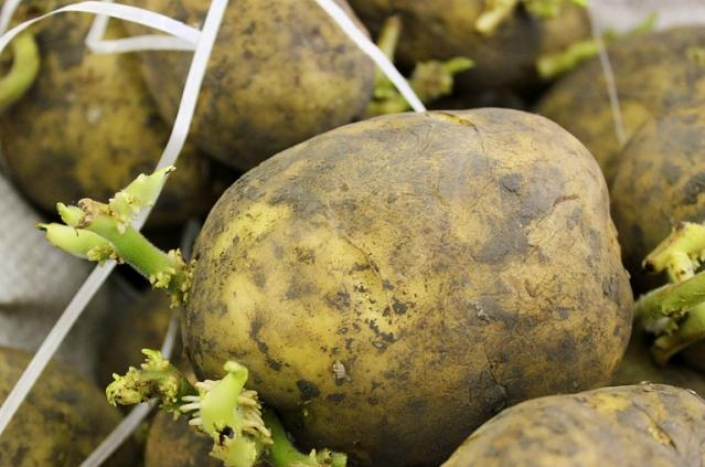 Odisha Signs MoU With Utkal Tubers For Potato Seed Production