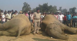 Elephants' Death Due To Lightning: DFO