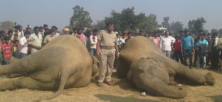 Elephants' Death Due To Lightning: DFO