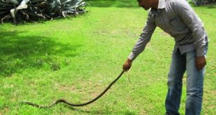 snakes rescued