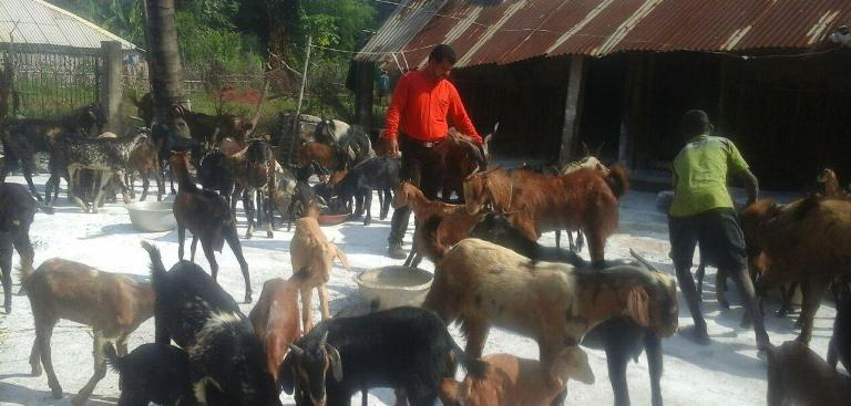 youth shuns corporate job to take up goat rearing