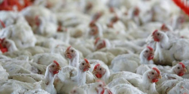 Bird flu in Odisha