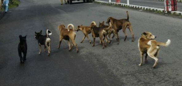 Stray dogs eat toddler's body