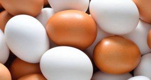 Plastic egg sale
