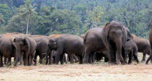 2017 Elephant Census