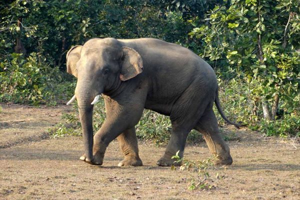 Panic as tusker barges into OUAT farmhouse