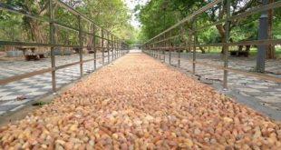 City's first Acupressure Walkways come up at Biju Patnaik Park