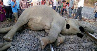 4 elephants killed in train accident in Jharsuguda