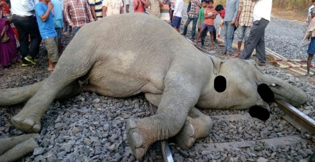 4 elephants killed in train accident in Jharsuguda