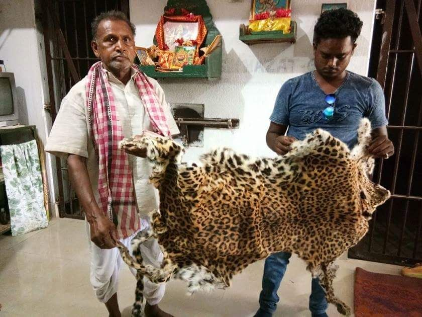 Leopard skin seized in Odisha, two detained