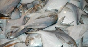 Cancer causing chemical 'formalin' found in fishes in Odisha