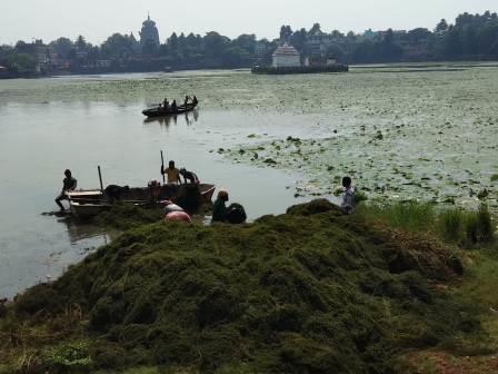 BMC starts de-weeding of Bindusagar in Bhubaneswar