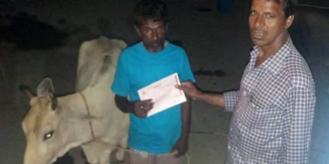 Ear tagging: BMC starts collecting fine from cattle owners