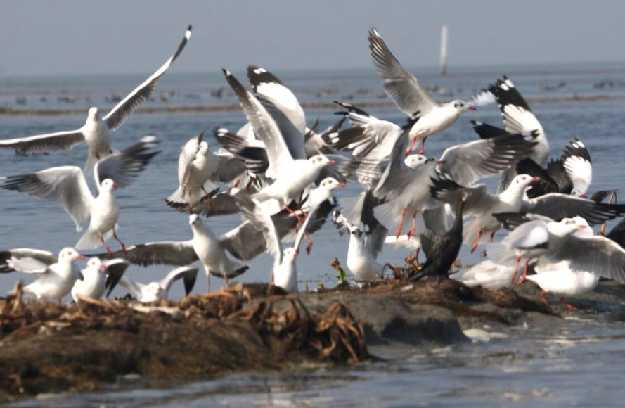 Annual bird census to begin in Chilika Lake on Jan 5