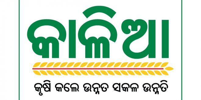 Six schemes including KALIA Yojana under Mo Sarkar initiative