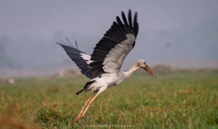 Mangalajodi bird sanctuary