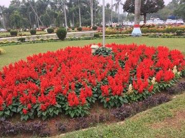 Secretariat flower garden