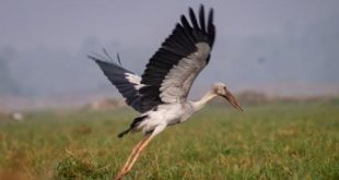 Mangalajodi: A Paradise for Avian Fauna