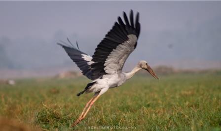 Mangalajodi: A Paradise for Avian Fauna