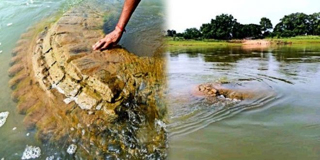 restoration of 500-year submerged temple