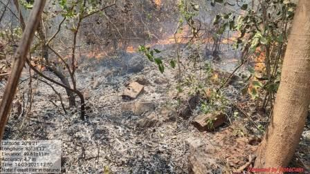 Forest fire situation
