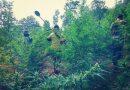 Ganja cultivation destroyed in Odisha