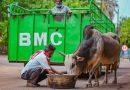 Stray animal feeding